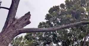 When a Tree Isn't a Metaphor